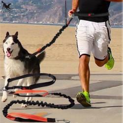Laisse pour chien jogging