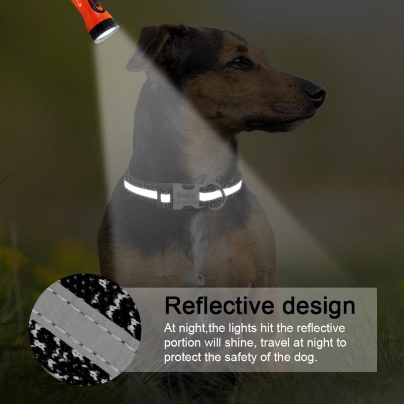 collier pour chien qui reflette la lumiere des voitures