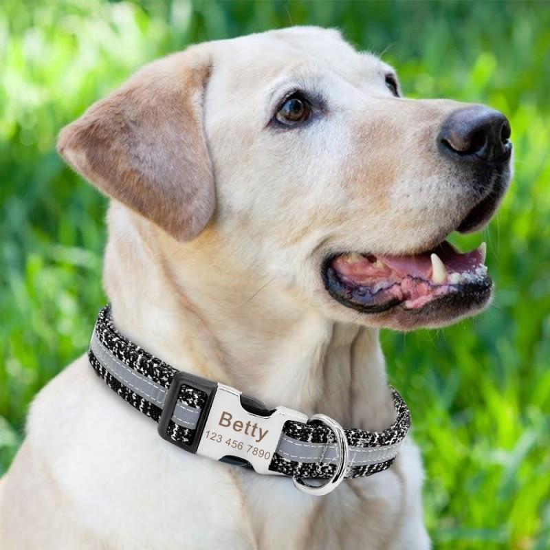 collier personnalise pour chien reflechissant
