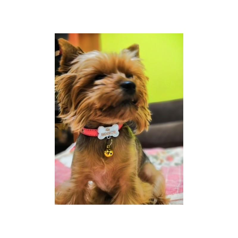 collier petit chien avec clochette brillante
