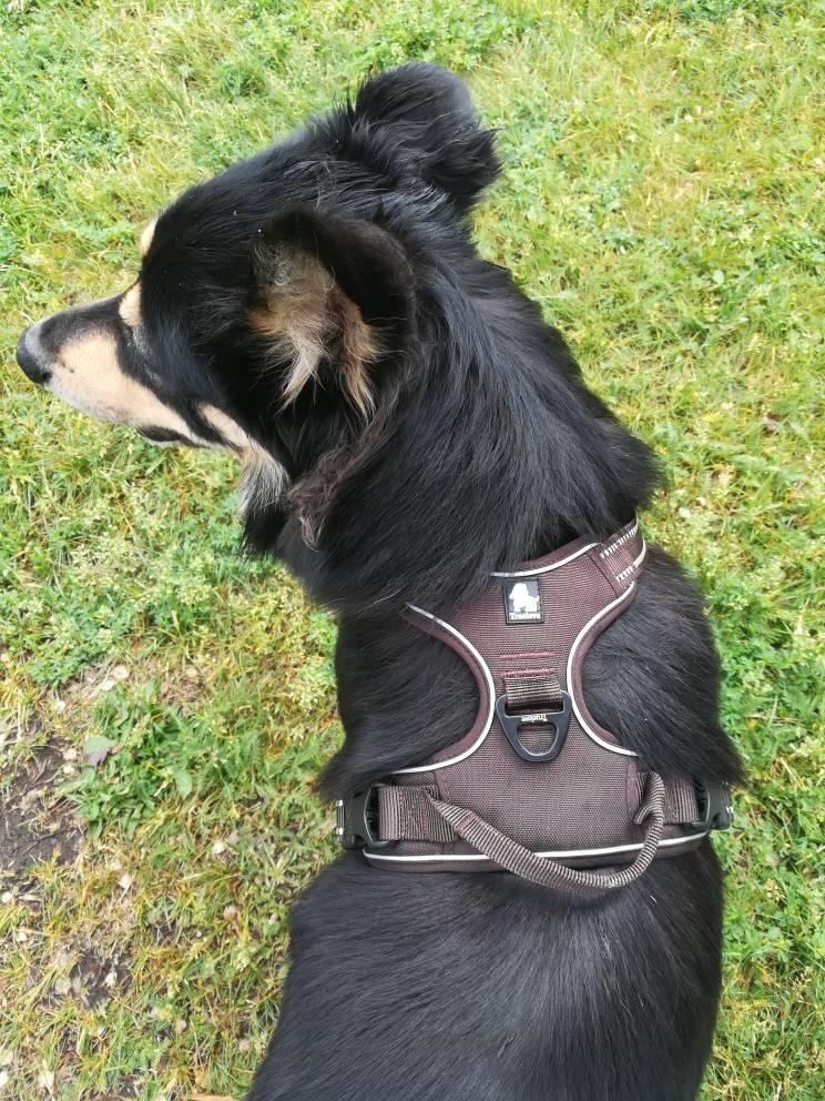 harnais reflechissant marron chien