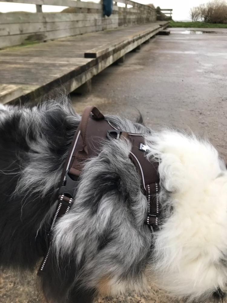 harnais réfléchissant marron petit chien